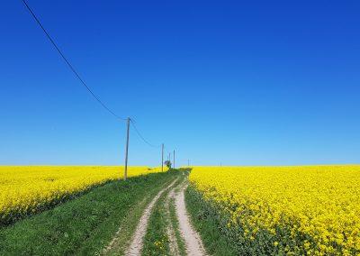 Das Bahnwärterhaus: Himmel, Strasse und Raps im Vogtland